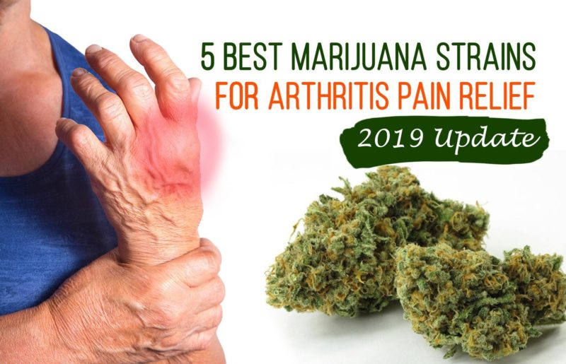5 Best Marijuana Strains for Arthritis Pain Relief [2019 Update]