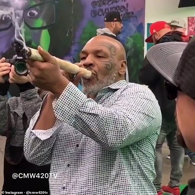 Hotboxing! Mike Tyson attempts to become heavy-weed champion of the world as he's spotted smoking a foot long joint