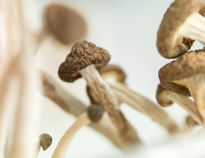 Study: Psilocybin Mushrooms Stimulate Growth Of New Brain Cells