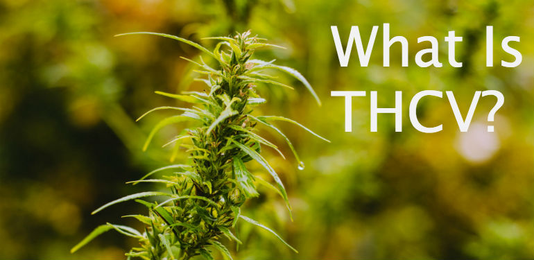 What Is THCV (Tetrahydrocannabivarin)?