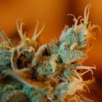 Illinois Senate approves recreational marijuana use, bill now moves to House