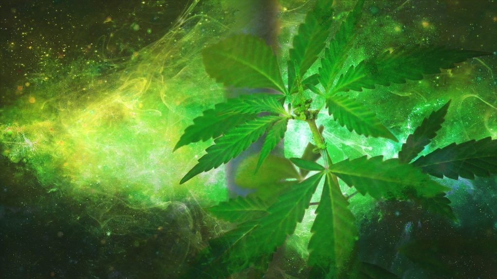Marijuana appears to be a valuable herb in treating Lupus