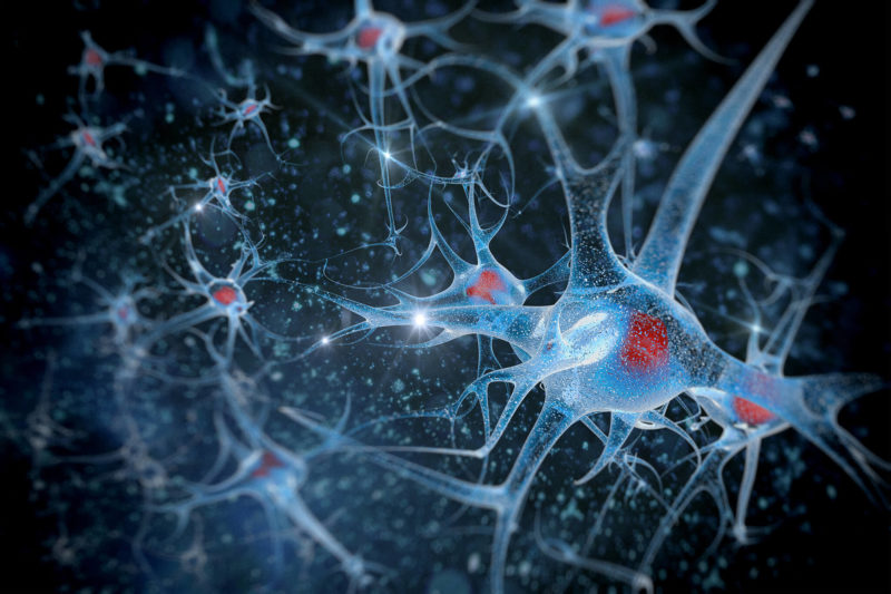 Neurons and their connections