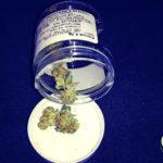 Overwhelming Evidence America Should Legalize Marijuana