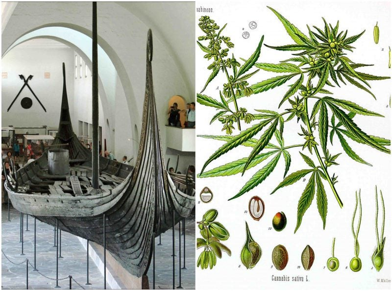Cannabis discovered in Viking grave