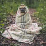 CBD used to help ease pet anxiety during recent storms