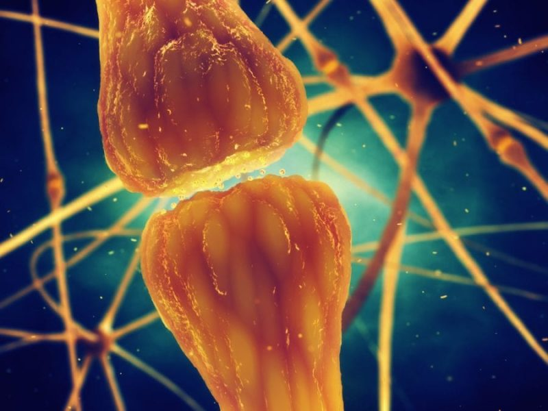 Four Types of Cannabinoid Receptors For Killing Pain and Stopping Inflammation