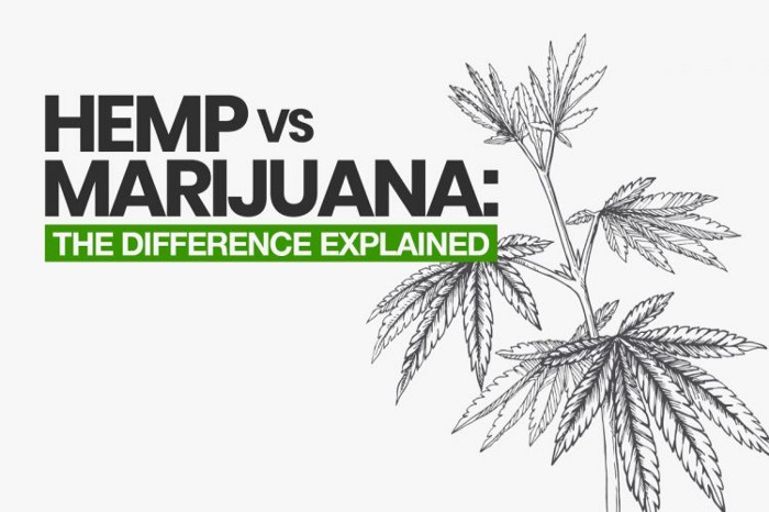 Hemp vs Marijuana: The Difference Explained (2019 Update)