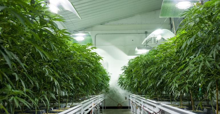 Cannabis Real Estate Investors Are Attracted to Opportunity Zones to Shelter Capital Gains