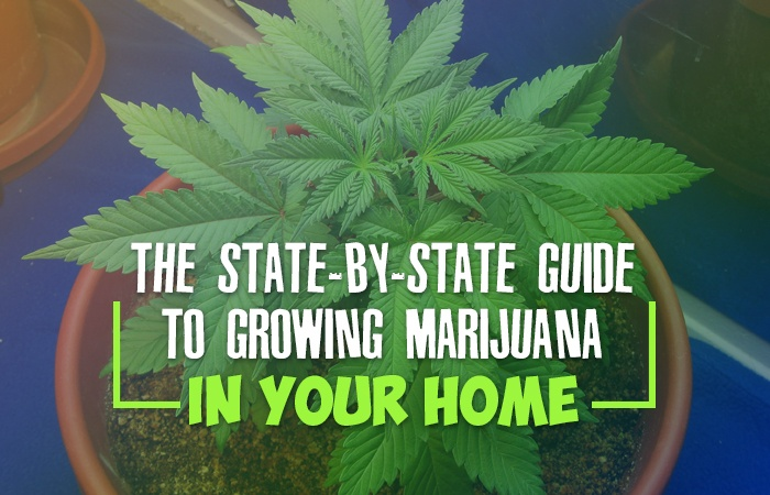 The State-By-State Guide to Growing Marijuana in Your Home