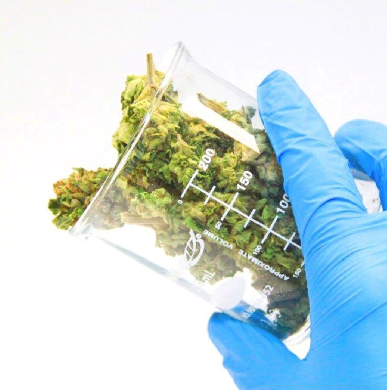 DEA Finally Agrees To Use Professionally-Grown Marijuana For Their Research