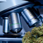 How to Pass a Cannabis Drug Test