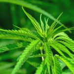 Australian Government Pledges $3 Million to Medical Cannabis Research
