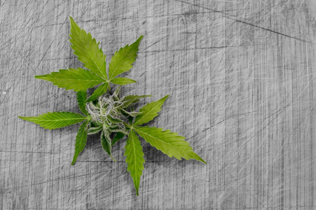 A cannabis dispensary sign with a large marijuana leaf on it.