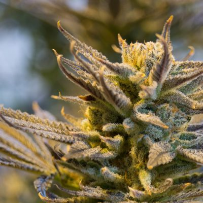 3 Cost-Effective Ways To Grow Cannabis At Home