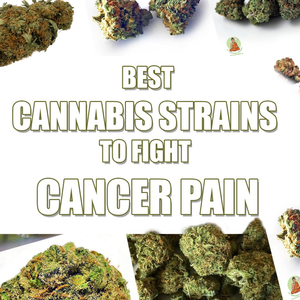 Best Cannabis Strains to Fight Cancer Pain