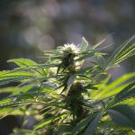 Kentucky House of Representatives Approves Medical Cannabis Legislation