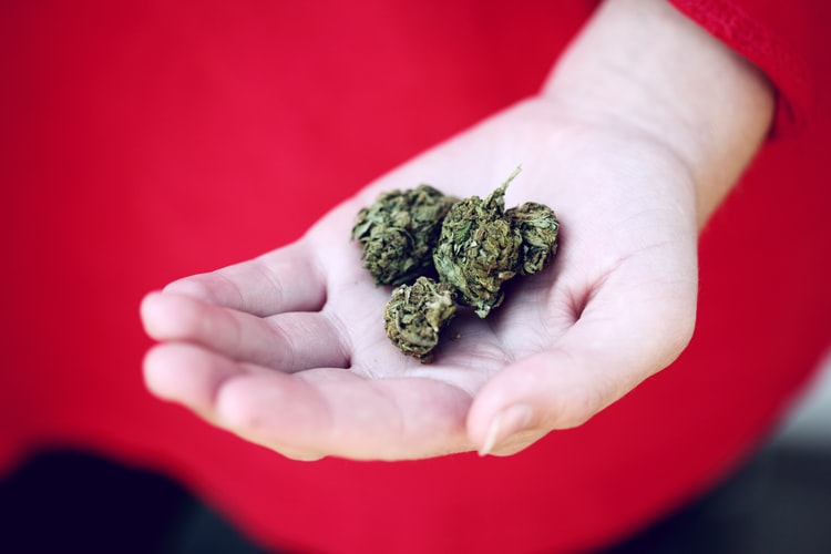 New-York-Governor-Announces-Plans-to-Tour-Legal-Cannabis-States