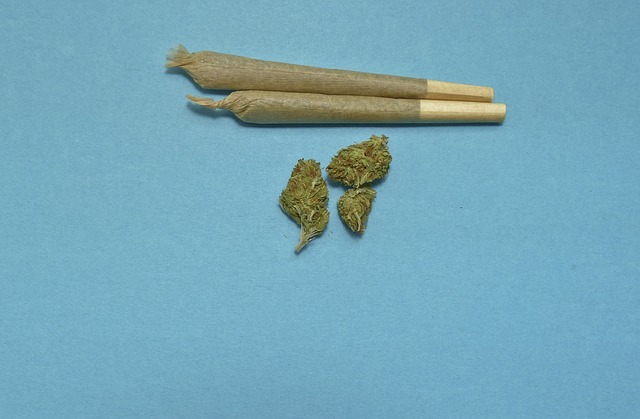 Vegas Stoners Beware Batches Of Moldy Cannabis Found At Local Dispensaries Prerolls and buds