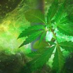 Holistic healing with Cannabis: Here is what you need to know.
